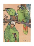 Illustration of Three Parrots