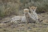 Cheetah Cub and Mother