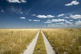 Kalahari Desert Track  Magadikgadi Pans National Park  Botswana