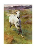 Study from Life for Colt Hunting in the New Forest