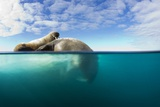 Walrus, Svalbard, Norway Papier Photo par Paul Souders