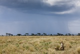 Cheetah and Approaching Storm
