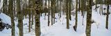 Forest Near Lake Bled  Upper Carniola  Slovenia