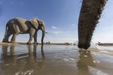 Elephants at Water Hole  Botswana
