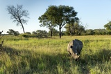 White Rhinoceros, Sabi Sabi Reserve, South Africa Papier Photo par Paul Souders