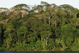 Rainforest in Soberania National Park