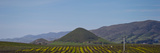 Vineyard with a Mountain Range in the Background  Edna Valley  San Luis Obispo County