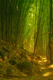 Light and Bamboo Forest  Road to Hana  Maui