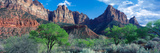 Cottonwood Trees and the Watchman  Zion National Park  Utah  USA