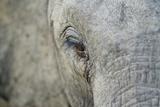 Elephant  Sabi Sabi Reserve  South Africa