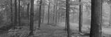 Chestnut Ridge Park  Orchard Park  New York State  USA
