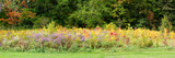 Colorful Meadow with Wild Flowers During Autumn  Ontario  Canada