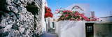 Flowers on Rooftop of a House  Santorini  Greece