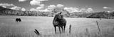 Horses Grazing in a Meadow  Kolob Reservoir  Utah  USA