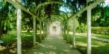 Pathway in a Botanical Garden  Jardim Botanico  Zona Sul  Rio De Janeiro  Brazil