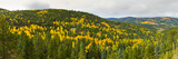 Aspen Hillside in Autumn  Sangre De Cristo Mountains  Angel Fire  New Mexico  USA