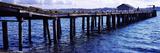 Seagulls on a Pier  Whidbey Island  Island County  Washington State  USA