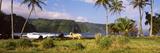 Horse and Palm Trees on the Coast  Hawaii  USA