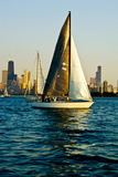 Sailboat in a Lake  Lake Michigan  Chicago  Cook County  Illinois  USA