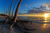 Dead Trees on the Beach at Sunset  Lovers Key State Park  Lee County  Florida  USA