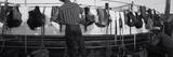 Cowboy with Tacks at Rodeo  Pecos  Texas  USA