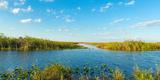 Reed at Riverside  Big Cypress Swamp National Preserve  Florida  USA