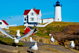 Seagulls at Nubble Lighthouse  Cape Neddick  York  Maine  USA