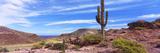 Saguaro Cactus in Arid Area  El Embudo  Isla Partida  La Paz  Baja California Sur  Mexico
