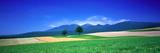 Farm Fields (Furano) Hokkaido Japan