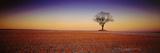 Tree Yorkshire England