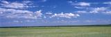Herd of Bison on Prairie Cheyenne Wy USA Papier Photo