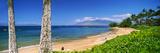 Palm Trees on the Beach  Kamaole Beach  Maui  Hawaii  USA