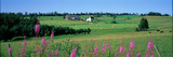 Summer Fields and Farm Prince Edward Island Canada
