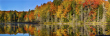 Trees in Autumn at Lake Hiawatha  Alger County  Upper Peninsula  Michigan  USA