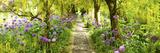 Laburnum Trees at Barnsley House Gardens  Gloucestershire  England