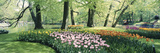 Flowers in a Garden  Keukenhof Gardens  Netherlands