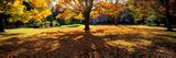 Autumn Holyoke Ma