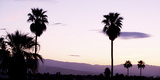 Silhouette of Palm Trees at Dusk  Palm Springs  Riverside County  California  USA