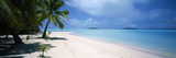 Palm Trees on the Beach  Tapuaetai  Aitutaki  Cook Islands