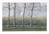 Birches and Corn Field
