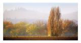Vineyard Mist