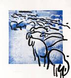 Sheep Portfolio 2
