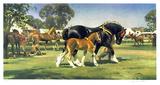 Horse Show