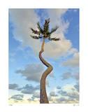 Curving Palm