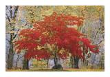 Cascade Fall Colors