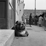 A Bulldog Lying by a Doorstep in the Foreground  with People at Stalls at a Street Market Behind