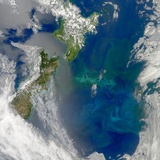 Phytoplankton Bloom in the Pacific Ocean East of New Zealand