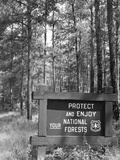1980s Sign in Front of Wooded Area Reading Protect and Enjoy Your National Forests