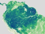 Forest Height Map of the Amazon Basin