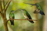 Hummingbirds  Costa Rica